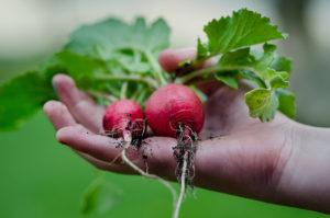 Commandez vos légumes biologiques