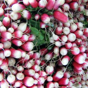 Radis rose long Bio